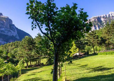 Camping en el Valle de Hecho. Pirineos. Pradera de hierba natural